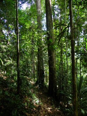 Lightly logged mature forests occupy the steepest hills and ridge tops.