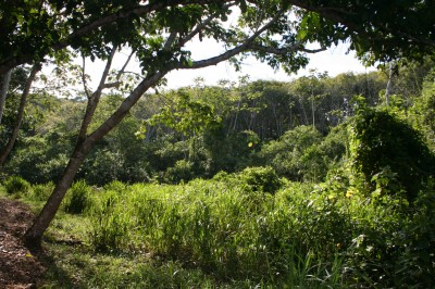 The Northern Sector consists of rubber groves enriched with native forest trees, wetlands and  small patches of pioneer forest.