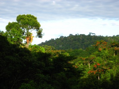 The Pancada Grande Forest seen from the farms of the Colônia to the north.