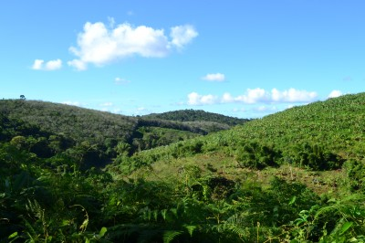The Luis Inácio Forest as seen from the south.