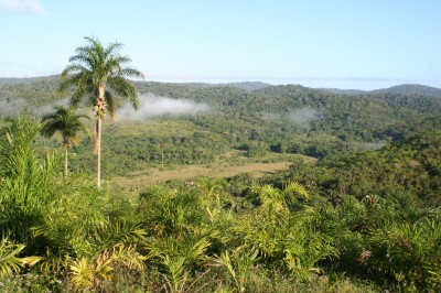 The Pacangê Forest is part of the largest remaining forest block in the region.