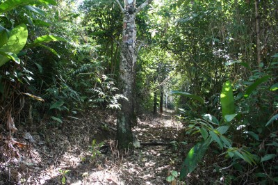 The Southern Sector is dominated by abandoned rubber groves.